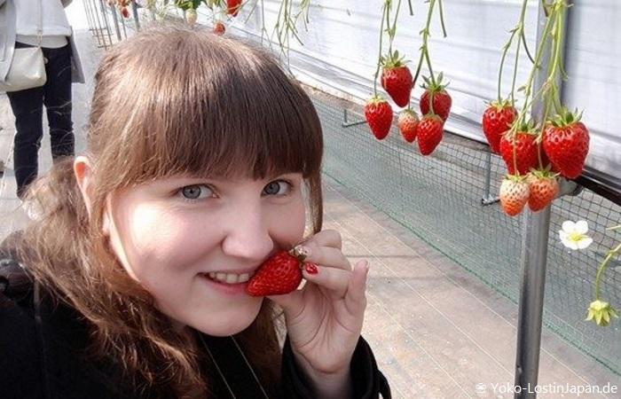 Erdbeeren in Yamanashi