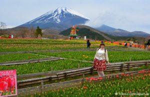 Bustour Fuji Grinpa
