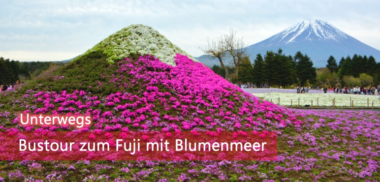 [Unterwegs] Bustour zum Fuji mit Blumenmeer