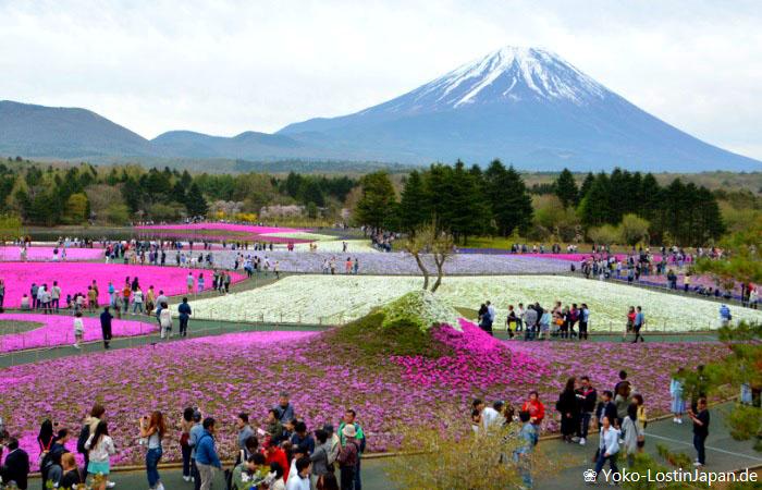 Kirschblüten Meguro