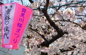 Kirschblüte Meguro