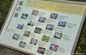 Kirschblüten Kaiserpalast
