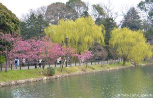 Kirschblüte Mitsuike Koen