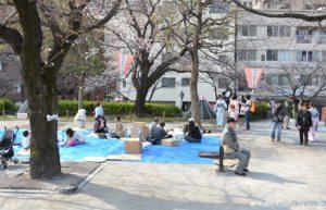 Kirschblüten Sumida