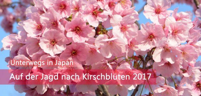 Kirschblüte 2017