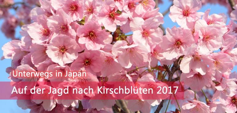 [Unterwegs] Auf der Jagd nach Kirschblüten 2017