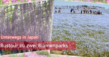 Bustour Hitachi Seaside Park Ashikaga Flower Park
