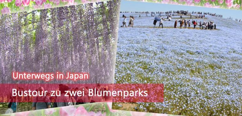 [Unterwegs] Bustour zu zwei Blumenparks (Ibaraki & Tochigi)