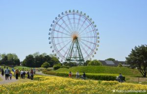 Bustour Hitachi Seaside Park