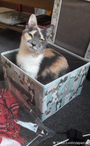 Katze Miko-chan