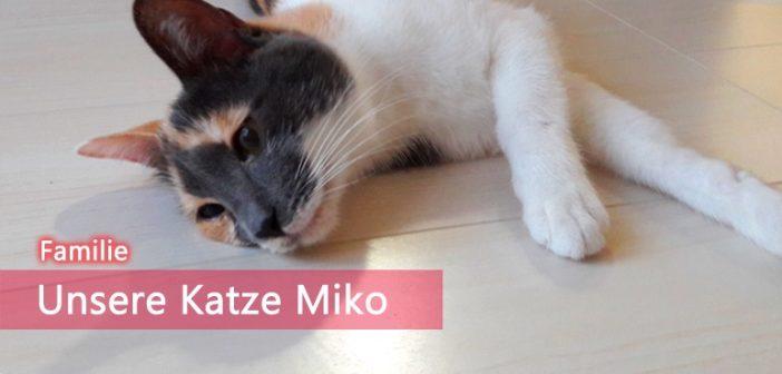 [Familienzuwachs] Unsere Katze Miko