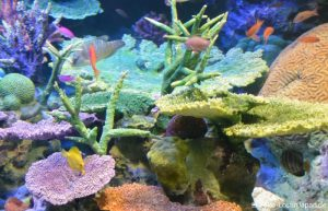 Sunshine Aquarium Ikebukuro