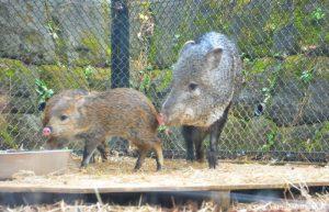 Saitama Omiya Park Zoo