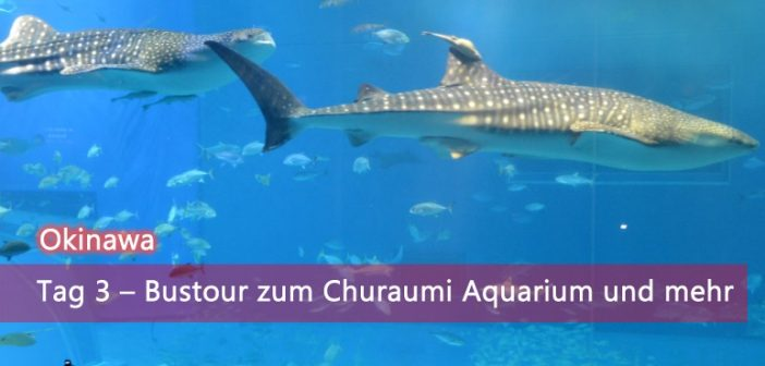 [Okinawa] Tag 3 – Bustour zum Churaumi Aquarium und mehr