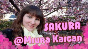 Kirschblüte Miura Kaigan