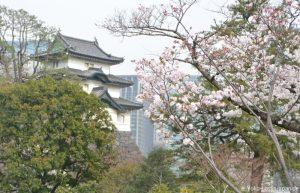 Kirschblüte Tokyo