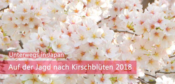 Kirschblüte 2018