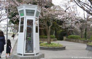 Kirschblüte Yokohama
