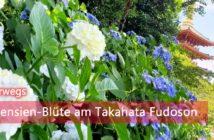 Takahata Fudoson Hortensien