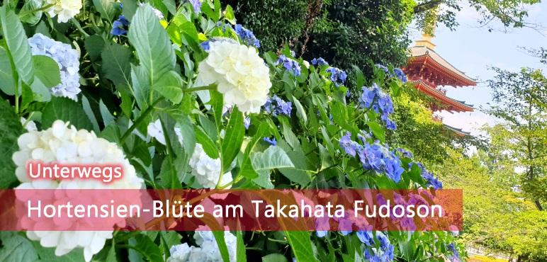 [Unterwegs] Hortensien-Blüte am Takahata Fudoson