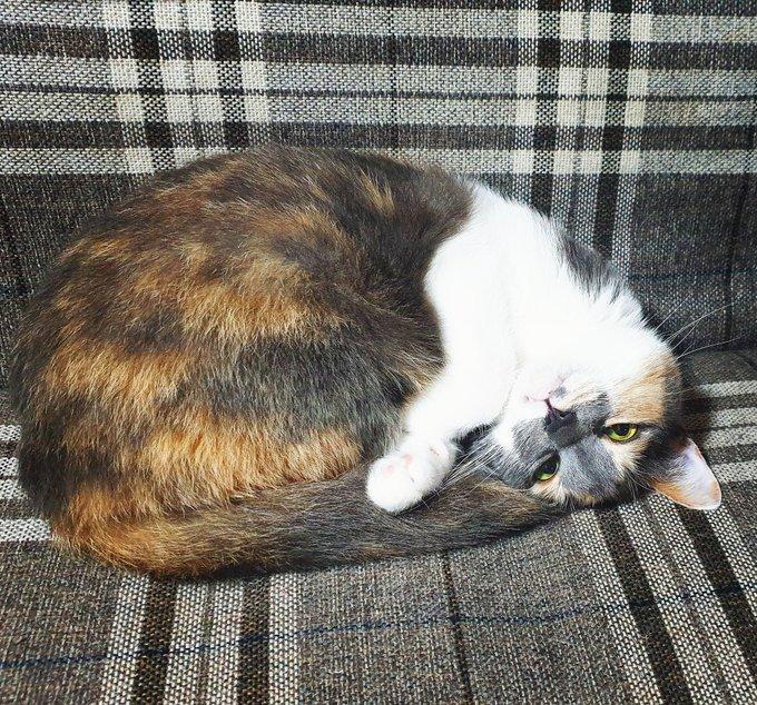 Gaman Week - Katze Miko
