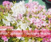 """Gaman Week"" zuhause – Goldene Woche 2020   Alltagsleben"