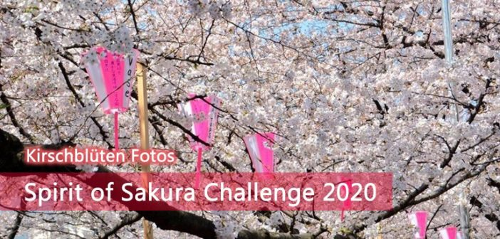 Kirschblüten Fotos: Spirit of Sakura Challenge 2020