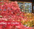 Ein Herbsttag in Chofu